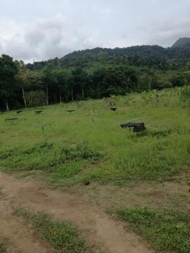 Jungle Thaïlandaise Koh Chang