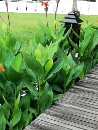 plantes emerald cove hotel